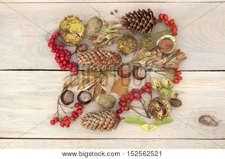 Autumn Still Life. Rowan berries pine cones walnut chestnuts and dried herbs on a light wooden surface. Top view.