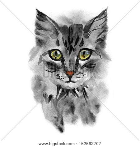 Portrait of a gray cute cat with yellow colored eyes on white background