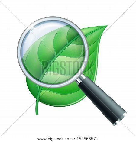 Magnifying glass and leaf, education concept. Scientific biology, study nature leaf, vector illustration