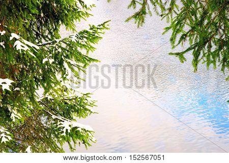 Beautiful fir tree twigs background. Fir-tree background.