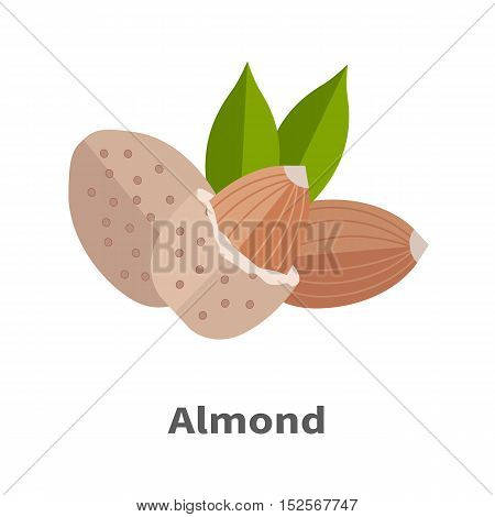 Almond nuts vector in flat design. Traditional raw, salty of fried snack. Diet product, culinary ingredient, spice, source of vitamins, elements, fatty acids and essential oils. Isolated on white.