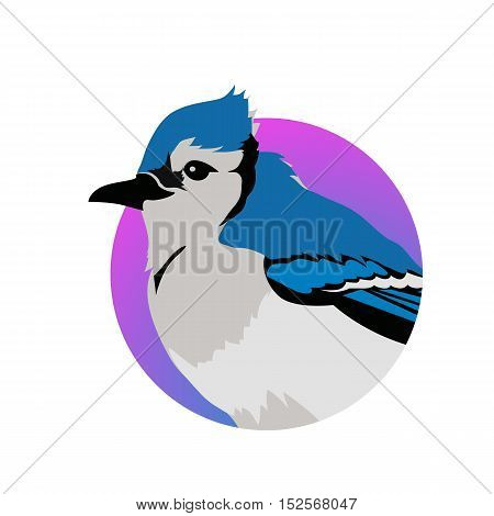Blue jay vector. Birds wildlife concept in flat style design.
