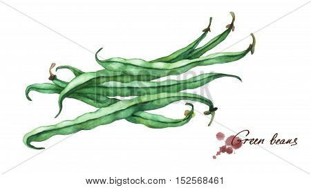 Green French beans. Hand drawn watercolor painting on white background.