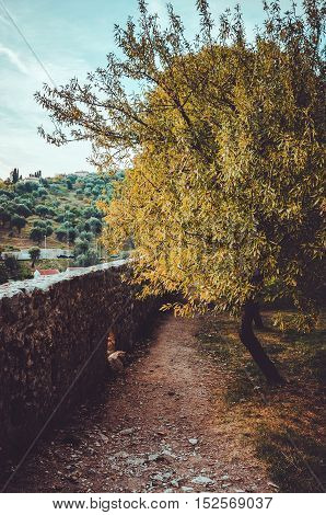 Beautiful wood at the sunset with oldest path in old city Stari Bar in Montenegro. Beautiful autumn view from ancient ruins of fortress. European travel. Text place, copy space.