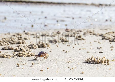 Soldier crabs marching during the low tide at the George Town wildlife sanctuary