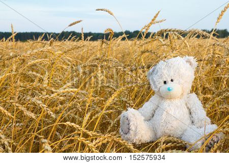 shabby Teddy bear sitting in a field not mown hay