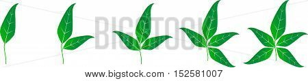 Illustration Template With Set Of Green Leaves.