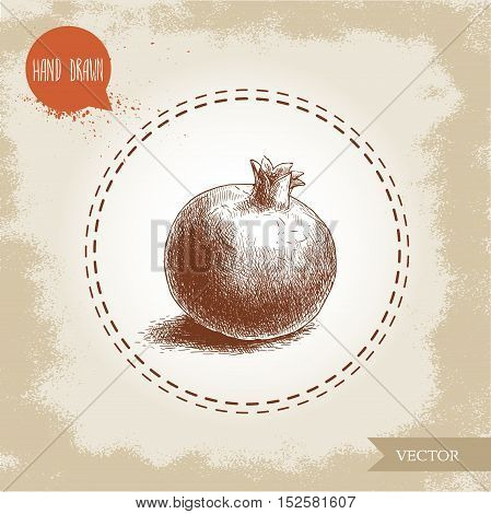 Hand drawn organic pomegranate. Sketch style vector illustration.