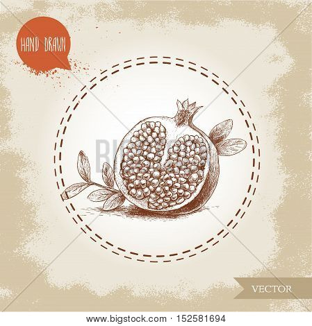 Hand drawn organic half of pomegranate with seeds and leafs. Sketch style vector illustration.