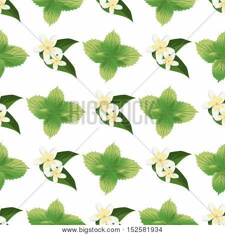 Mint Stems and Leaves Drawing Seamless Pattern. Green fresh mint seamless pattern texture leaf floral drawing. Vector floral green mint seamless pattern plant nature design abstract herb ornament.