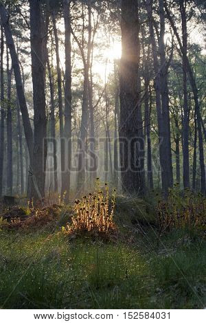 Sun shining through a dence forest giving golden glow to the forest floor