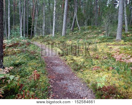 The dirt footpath in the autumn forest