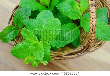 Many reasons to eat mint. (soft focus,lens blur) Health Benefits of Mint Leaves.