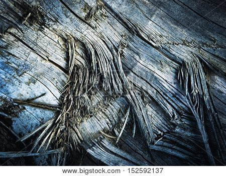 dark background torn wood on an old tree trunk