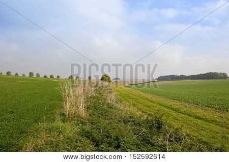 Bridleway With Crops