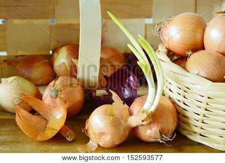 How to Store Onions to Avoid Sprouting or Softening.