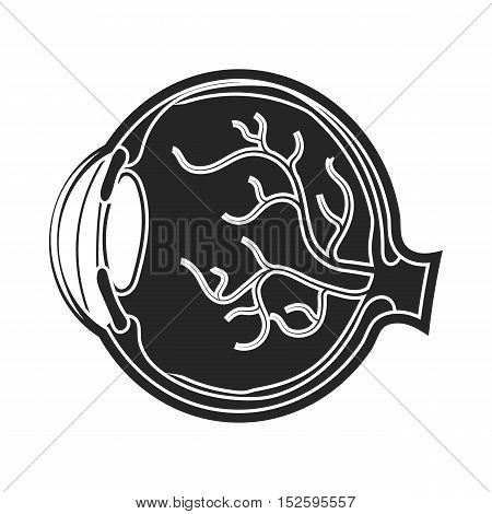 Eyeball icon in black style isolated on white background. Organs symbol vector illustration.
