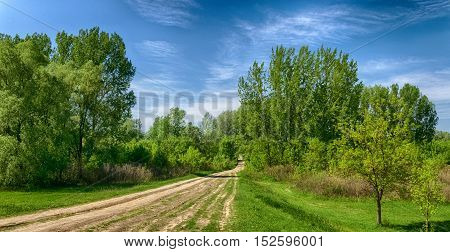 hungarian countryside. dirt road. deep blue sky and forest green. summer season landscape.