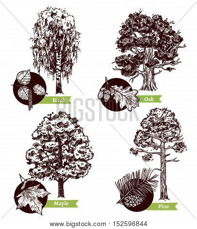 Four various sketch deciduous trees and leaves design concept isolated on white background hand drawn vector illustration