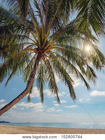 Silhouette coconut palm tree on Thai beach in Koh Chang Thailand. Nature vacation background. Beautiful tropical ocean or sea and sand beach on island on sunset times