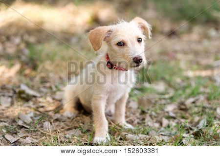 Puppy dog cute is an adorable puppy dog pet outdoors looking at you with those eyes.
