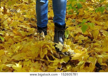 Steps autumn. The land is covered with a yellow blanket of fallen leaves.