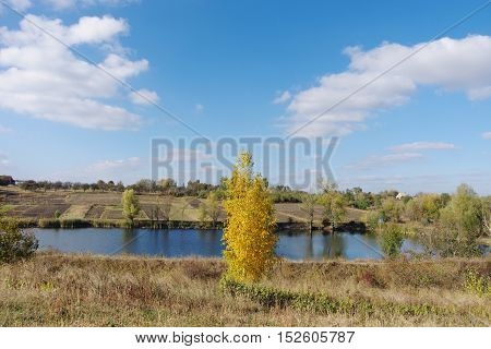 Tree with yellow leaves as a harbinger of autumn