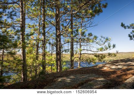 Pine trees growing on high rock cliff facing blue lake basking in sunshine. Algonquin Provincial Park, Canada.