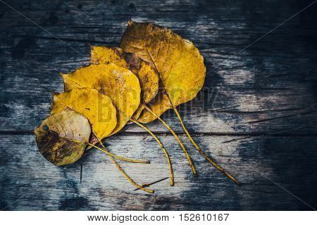 Low Key Of Yellow-brown Leaf On Wet Autumn Floor In A Park In Thailand-selective Focus And Toned Col