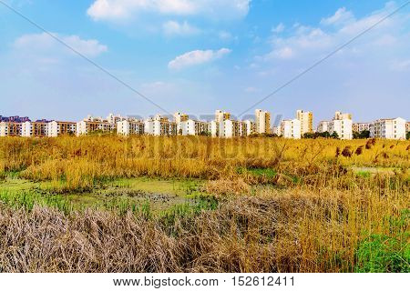 fields with apartment buildings in the background on the outskirts of Shanghai