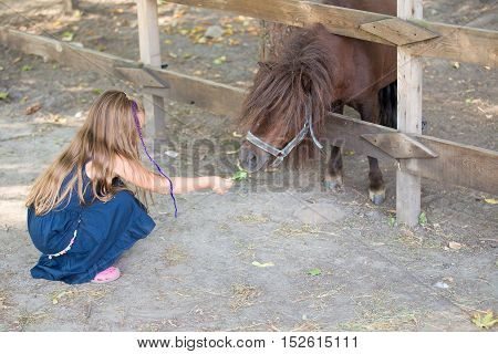 little girl feeding a pony with grass through a fence
