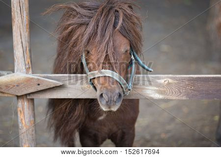 beautiful brown pony behind a wooden fence, short depth of field
