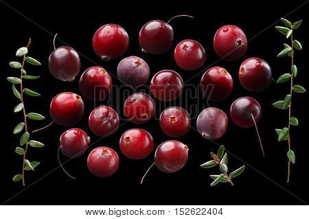 Cranberries Alone Set, Leaves, Paths