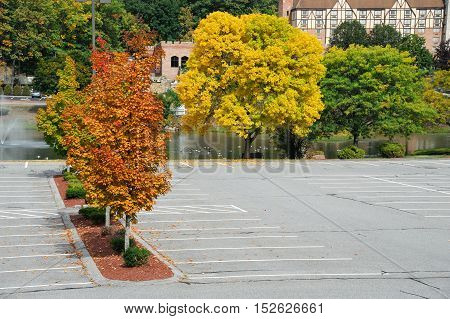 autumn colorful tree at the side of empty parking lot