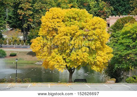 autumn yellow tree at the side of empty parking lot in industrial area