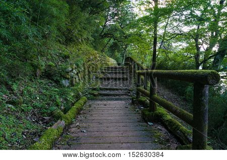 Hiking Path In Japanese Forest