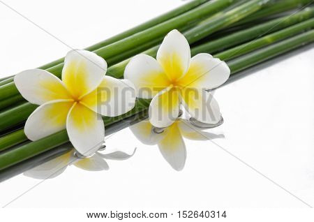 Two frangipani with bamboo grove