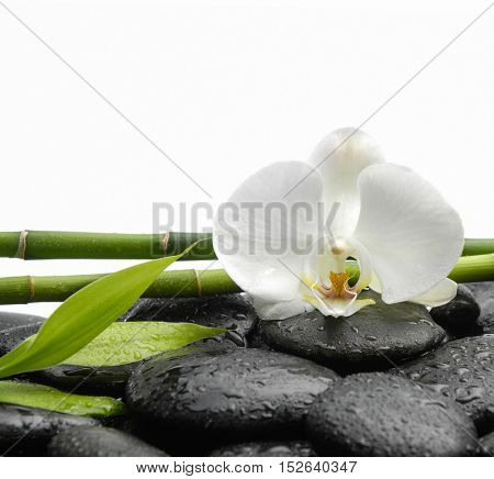 White orchid blossom with black stones ,grove,leaf  on wet background