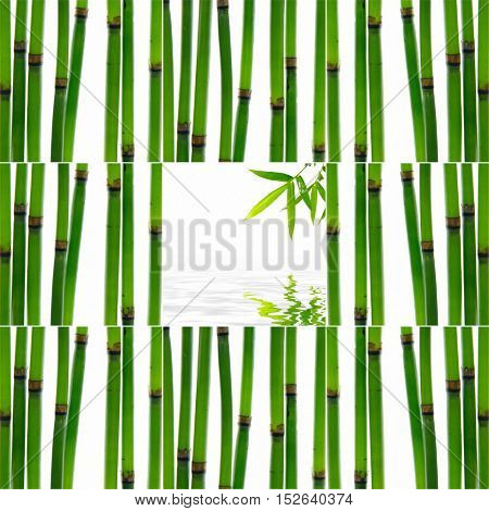 Set of young bamboo sticks with leaf