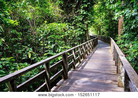 Wooded footpath on the floor of a tropical rainforest.