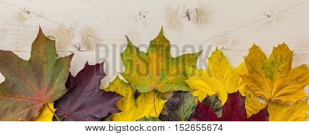 Panorama Of Colorful Autumn Leaves In Yellow, Green And Brown