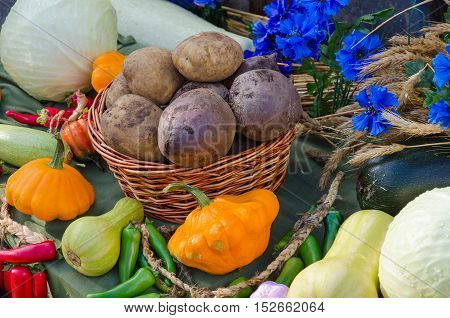 Autumn Still Life. Harvest of variety of fresh vegetables