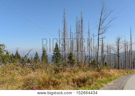 Dreisesselberg - nature reserve region where three countries meet with consequences of forest extinction