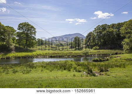 Summer at Elterwater, The Lake District, Cumbria, England