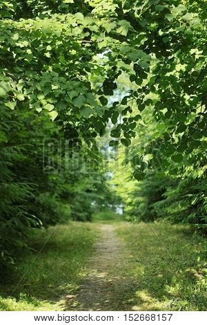 Path in forest among trees summer day