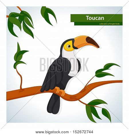 Collection of colorful birds. Toucan. Vector clipart.