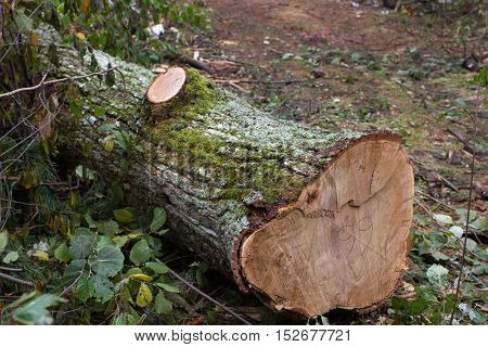 Total deforestation, cut forest, felling, roundwood, trunks Oxygen reduction climate change