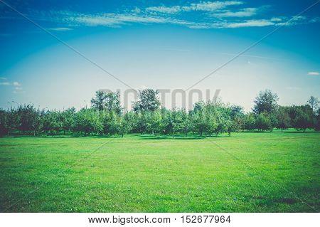 Autumn Park Landscape Retro