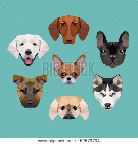 polygonal dogs vector collection (husky staffordshire terrier pekingese french bulldog dachshund labrador chihuahua)