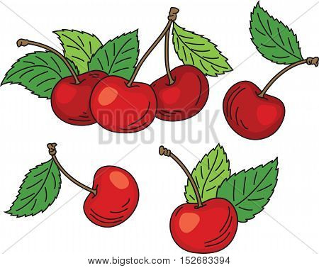 Vector illustration of red ripe cherries with green leaves isolated on white background.